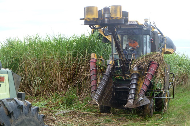Sugar Cane Harvester ready to cut another row of cane at Marian,